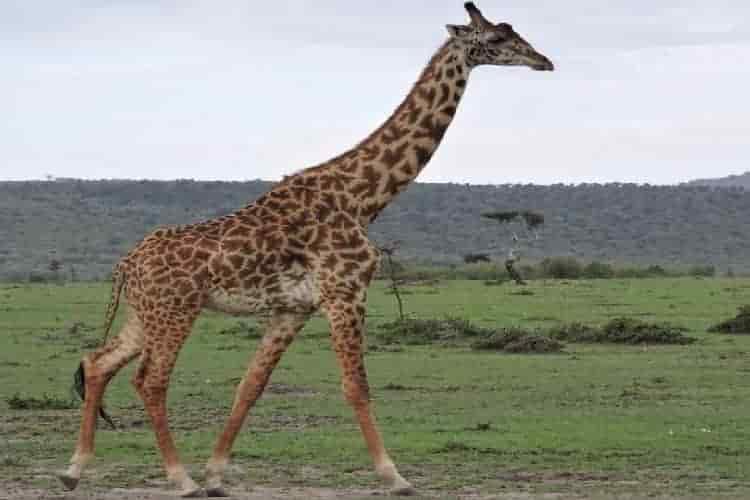tarangire-serengeti-and-manyara-6days