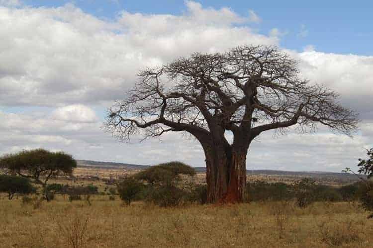 tarangire,serengeti and ngorongoro-7days